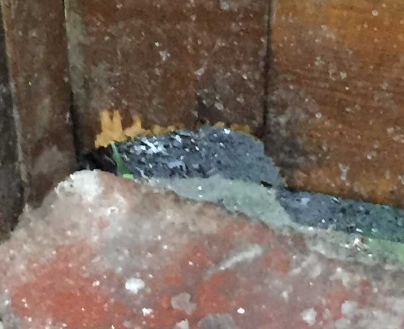 Rat chews through door to gain entry to house